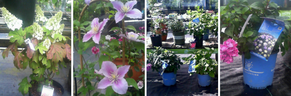 We offer the best deals at Walnut Grove Nursery.